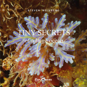 Cover-Tiny-Secrets-2
