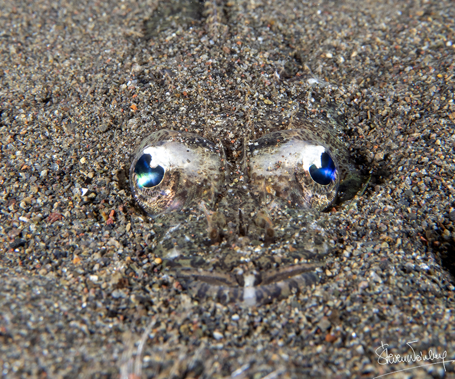 Le sable a des yeux : poisson-crocodile / The sand has eyes: crocodile fish